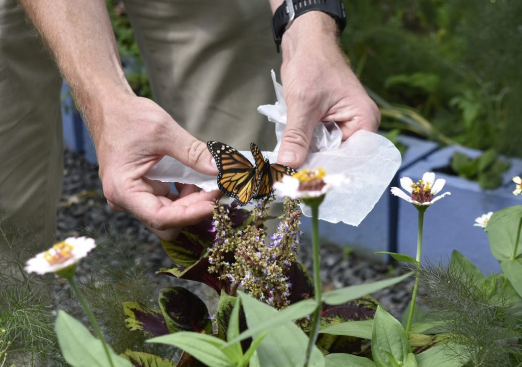 Butterfly House is Back at Smith-Gilbert Gardens
